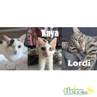 Ehni & Kaya & Lordi, TSV SOS Katze - Katze 1