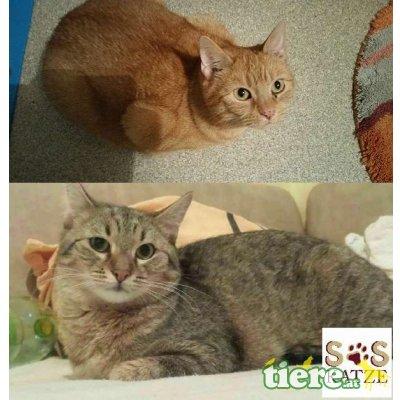 Evoly & Lia, TSV SOS Katze - Katze 1