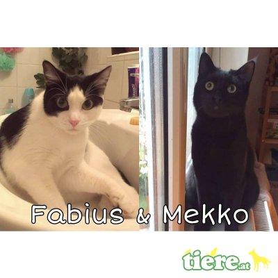 Fabius und Mekko, Tierschutzverein SOS Katze - Kater 1