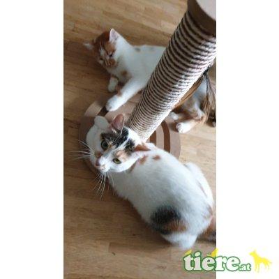 Hanni & Nanni, TSV SOS Katze - Katze 1