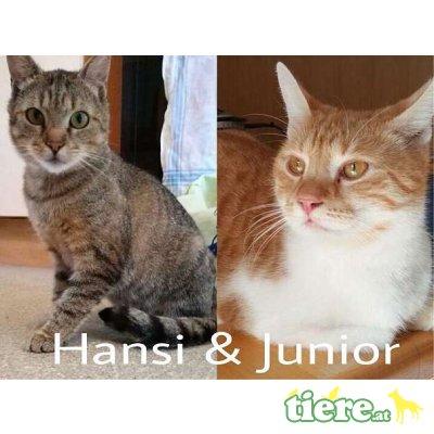 Junior und Hansi, Tierschutzverein SOS Katze - Kater 1