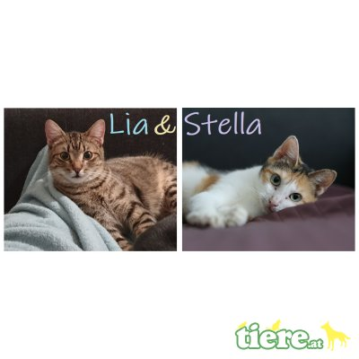 Lia & Stella, TSV SOS Katze - Katze 1