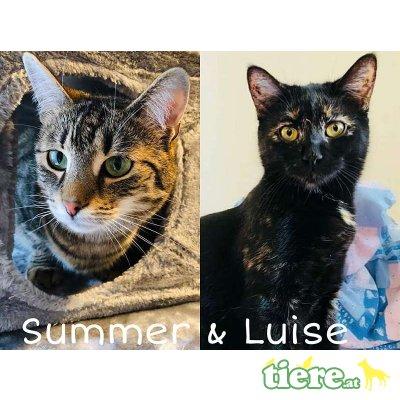 Luise und Summer, Tierschutzverein SOS Katze - Katze 1