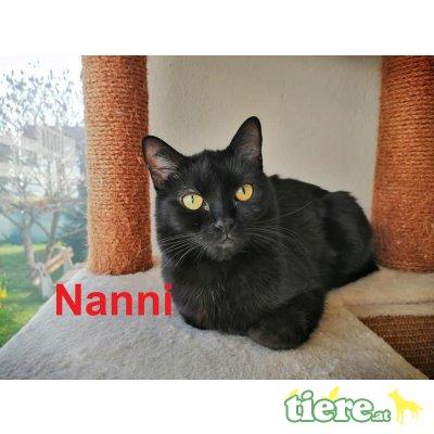 Nanni, TSV SOS Katze - Katze 1