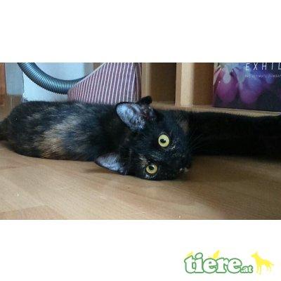 Stella und Mey, Tierschutzverein SOS Katze - Katze 1