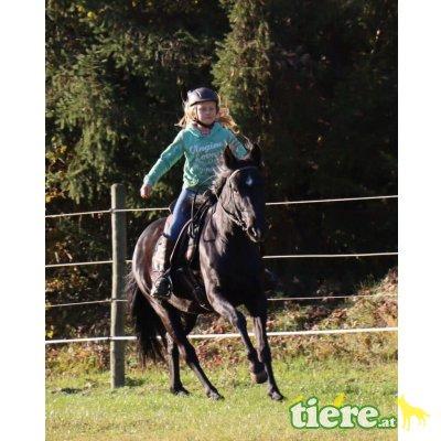 Bella, Quarter Horse x Reitpony - Stute 1