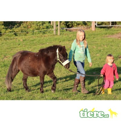 Jasmine, Shetland Pony - Stute 1