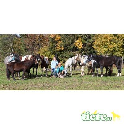 verschiedene Pferde abzugeben